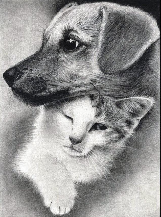 Фото рисунков с животными карандашом