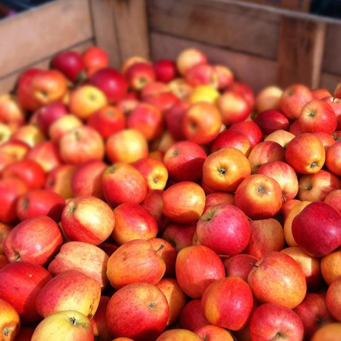 Купим яблоки мелким оптом