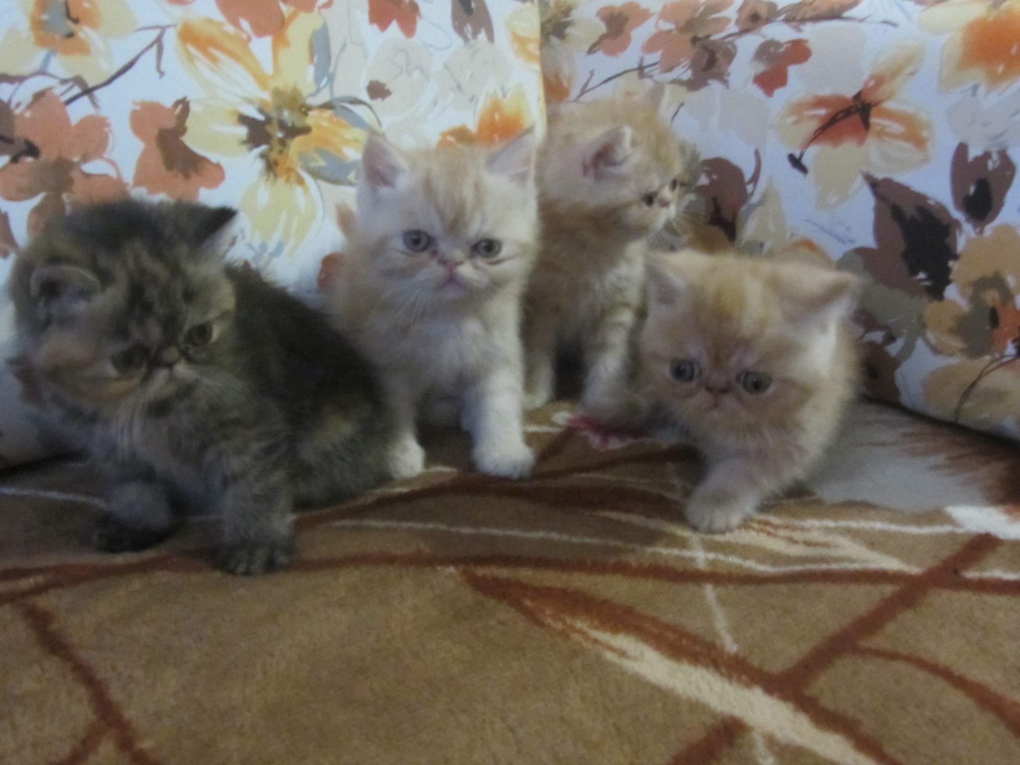 И разве может быть иначе, если в нем живут самые очаровательные кошки!