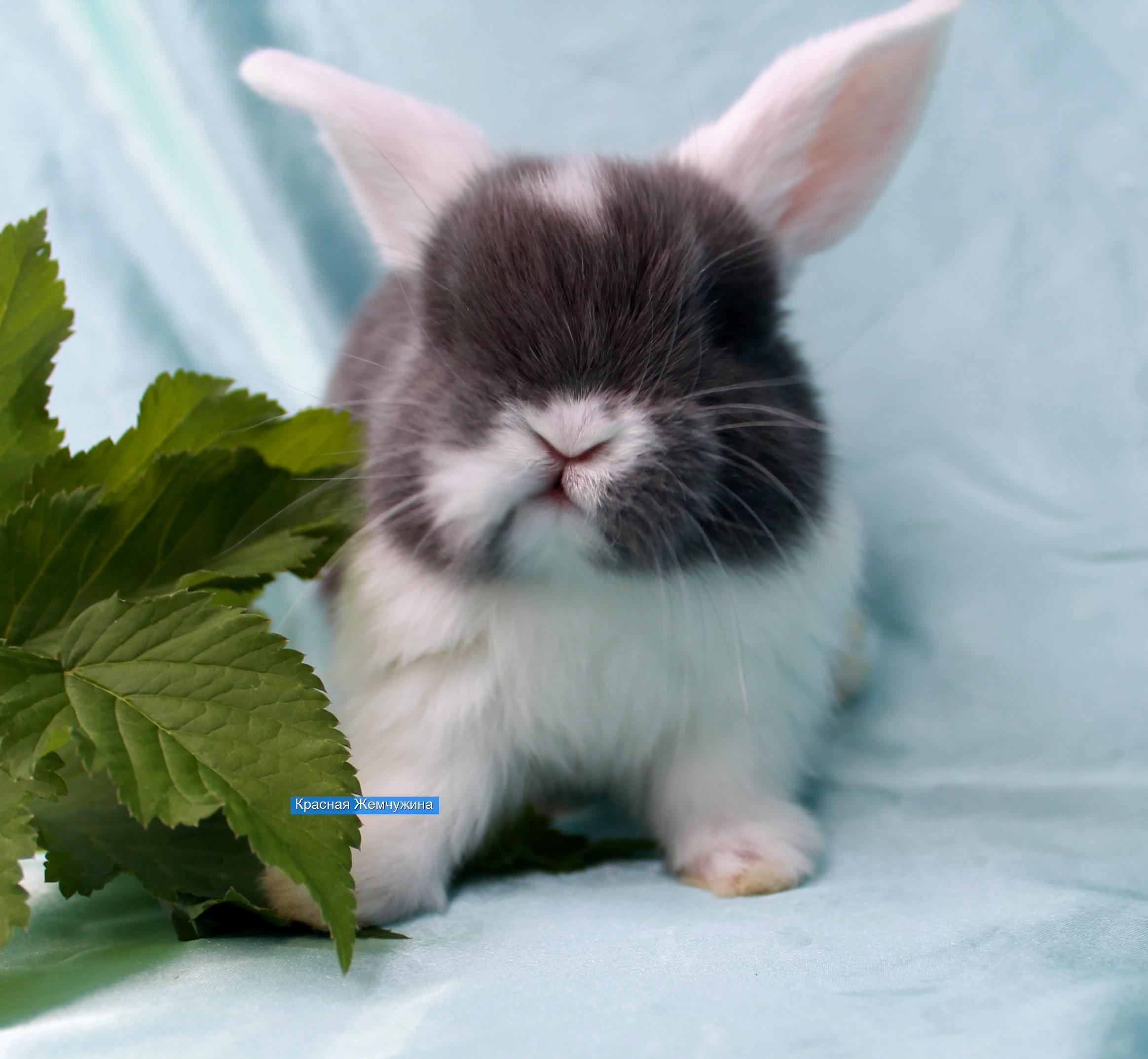 Декоративный кролик в подарок