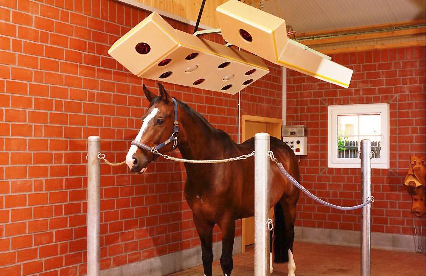 Солярий для лошадей