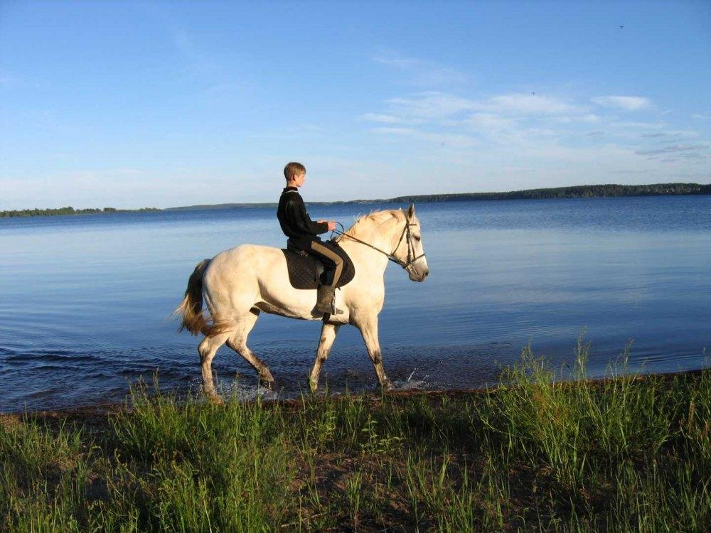 Конные прогулки и увлекательная рыбалка: отдых для всей семьи в «Раевской усадьбе»