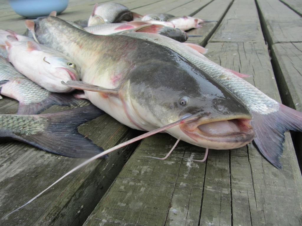 рыбалка в астрахани без посредников