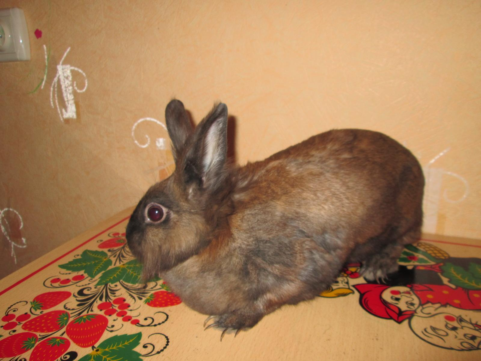 кролики великан пермь в дар всегда быстро узнавать