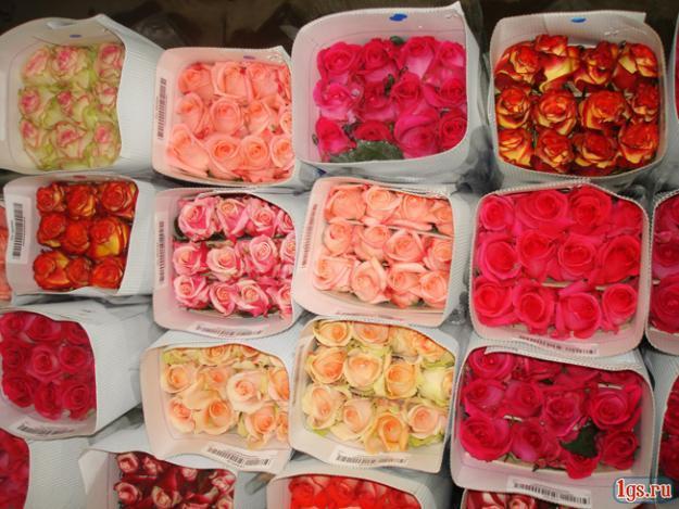 Цветы мелким оптом дешево